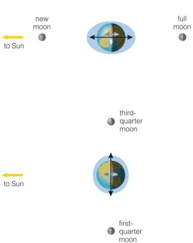 Diagram of the Moon's and Sun's gravitational pull on Earth at different times of the (lunar) month. (from Pearson, The Cosmic Perspective)
